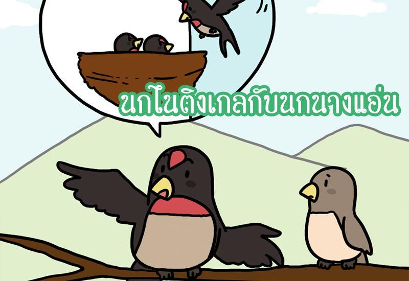 นกไนติงเกลกับนกนางแอ่น