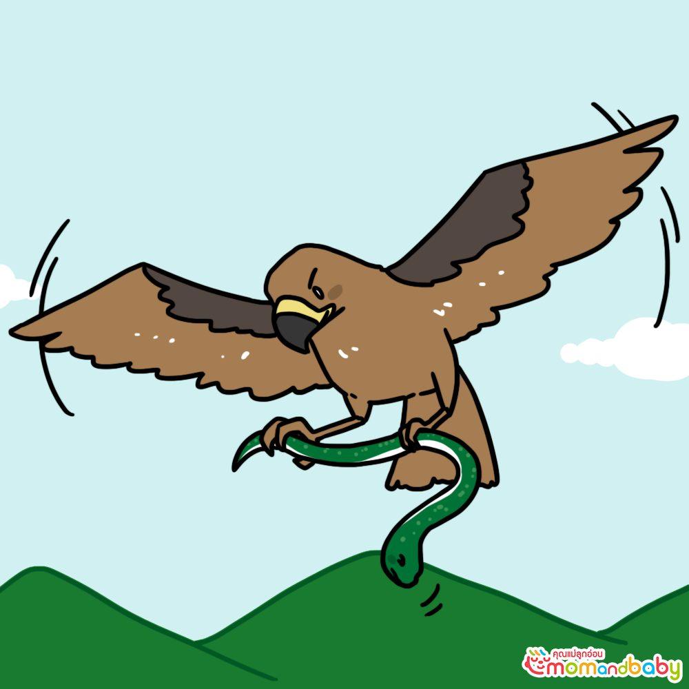 เหยี่ยวดำจับงูแล้วบินขึ้นไปบนฟ้า