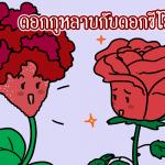 ดอกกุหลาบกับดอกซีโลเซีย