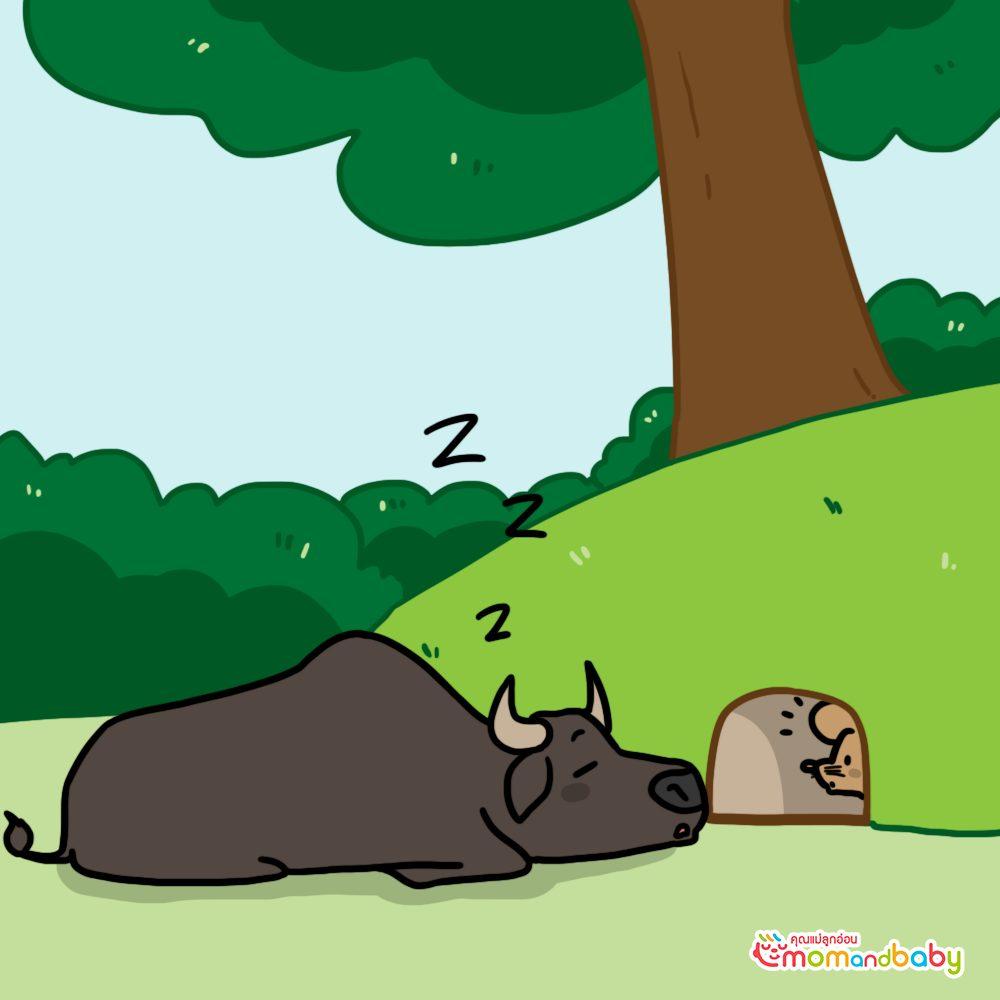 เมื่อหนูสังเกตเห็นมันก็ออกมาจากรูและพุ่งขึ้นไปบนวัว
