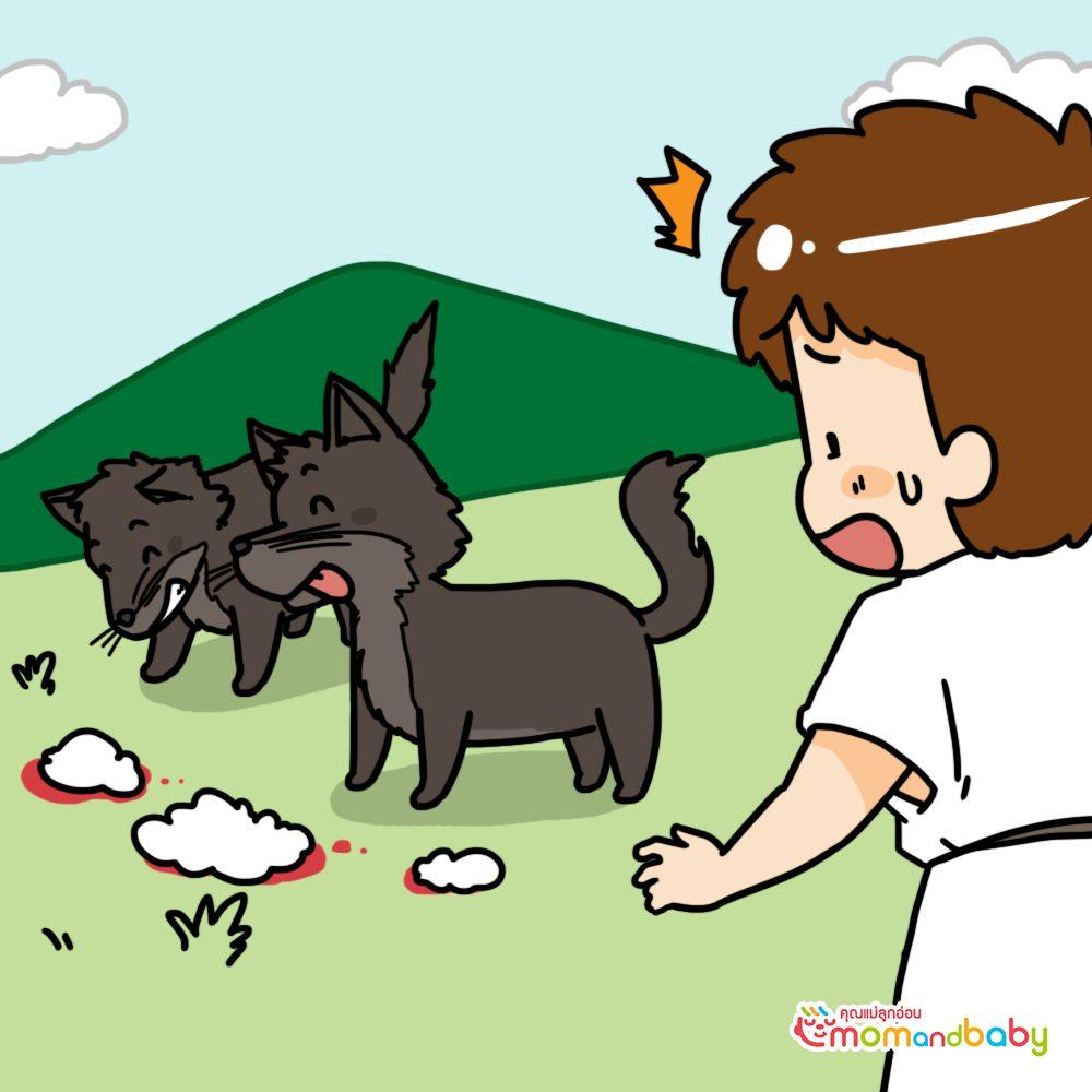 เด็กชายคร่ำครวญเมื่อเห็นแกะของเขาถูกหมาป่าฆ่าอย่างน่าสยดสยอง